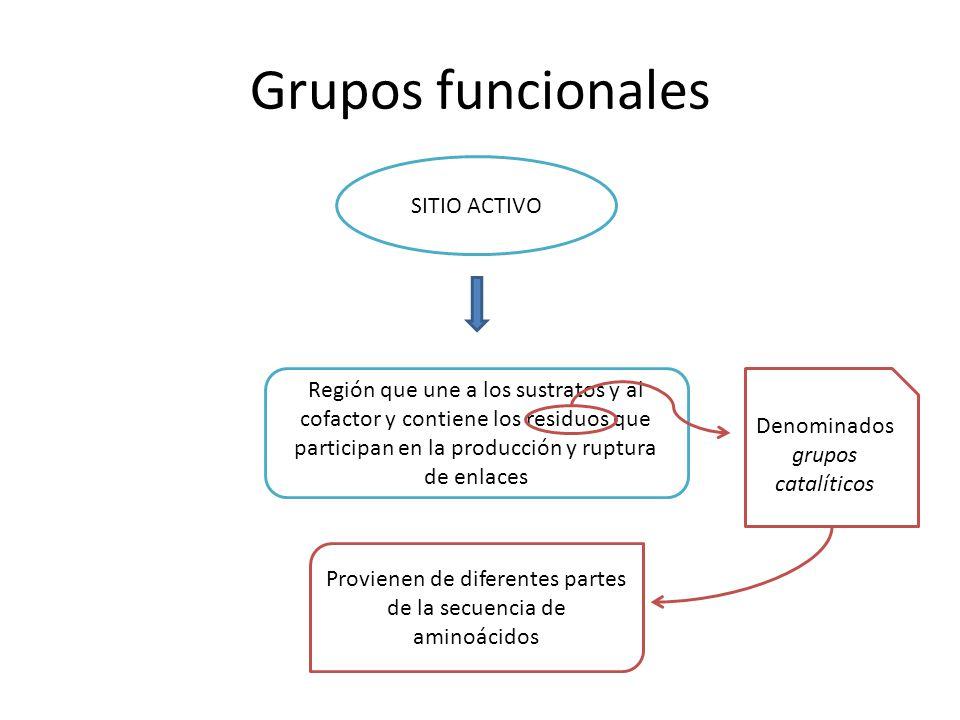 Grupos funcionales SITIO ACTIVO Región que une a los sustratos y al cofactor y contiene los residuos que participan en la producción y ruptura de enla