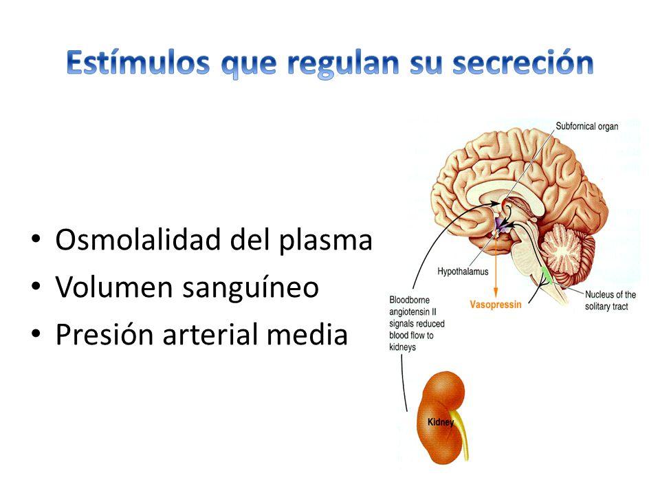 Osmolalidad del plasma Volumen sanguíneo Presión arterial media