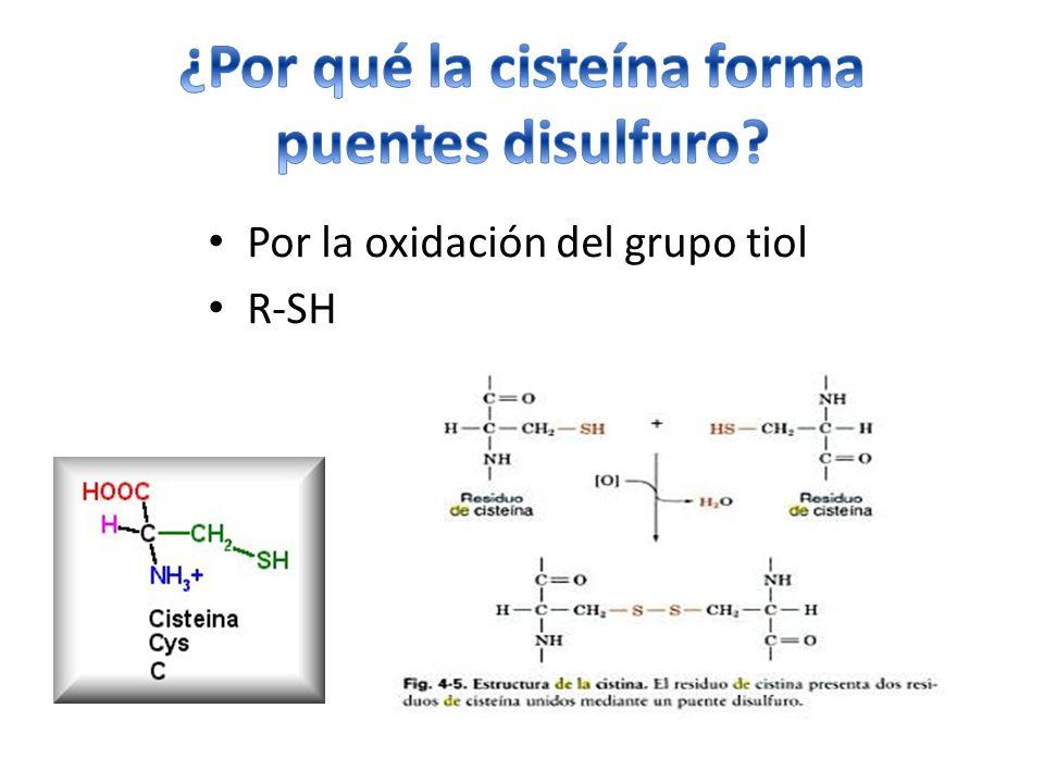 Por la oxidación del grupo tiol R-SH