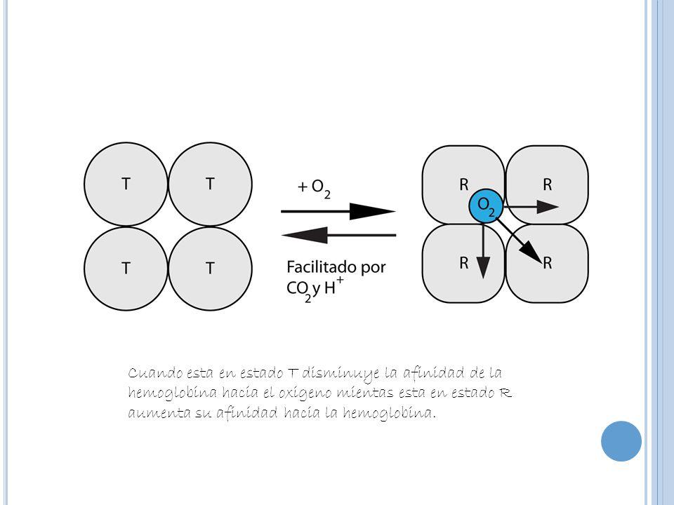 La diferencia de algunos aminoácidos de mioglobina y hemoglobina son los que genera que una subunidad del tetrámero no pueda ser reemplazada por la mioglobina