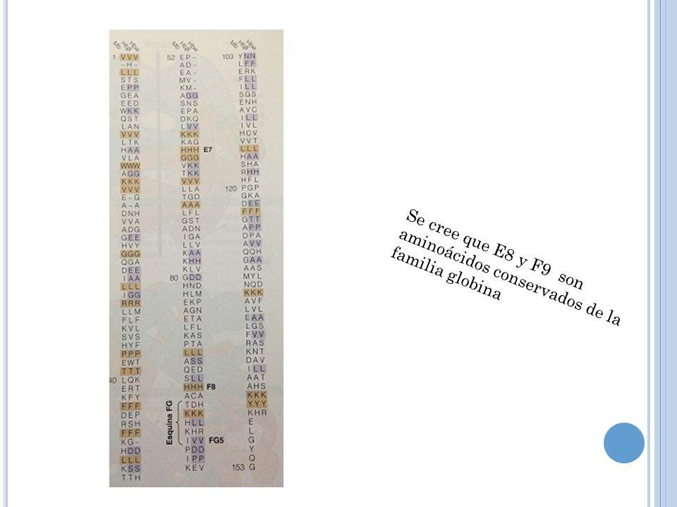 Se cree que E8 y F9 son aminoácidos conservados de la familia globina