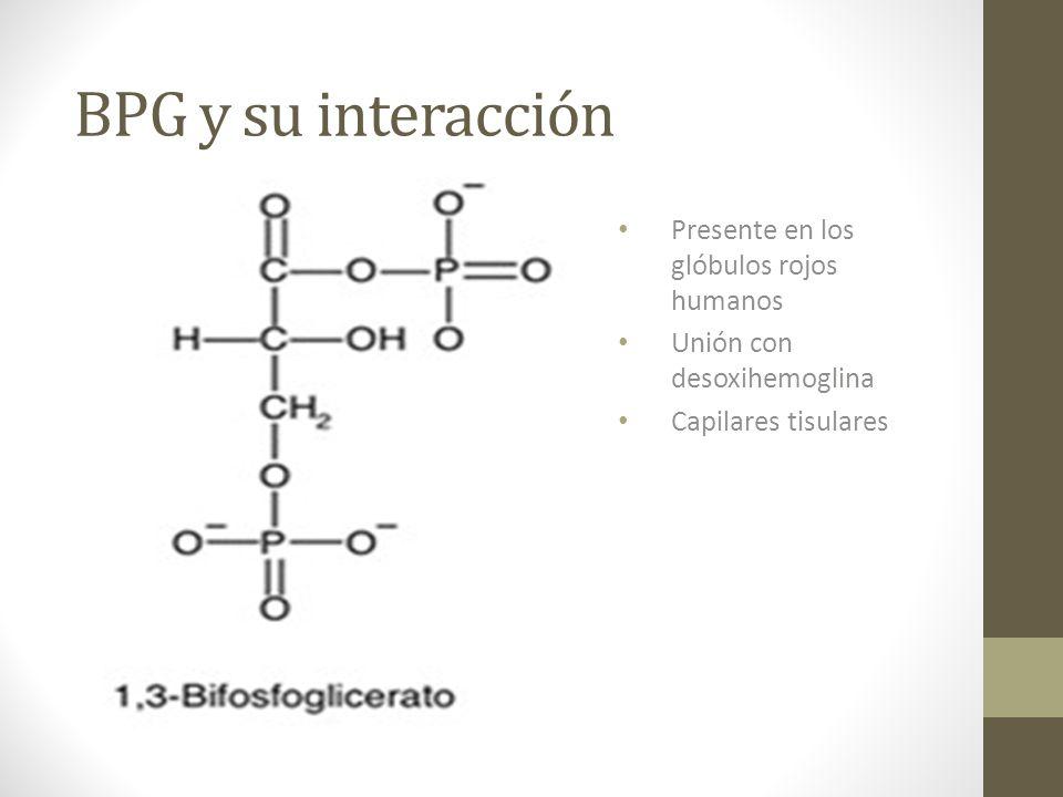BPG y su interacción Presente en los glóbulos rojos humanos Unión con desoxihemoglina Capilares tisulares