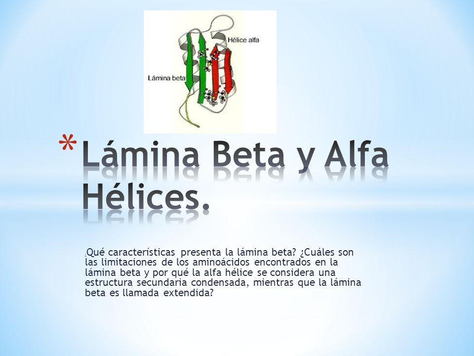 ¿ Qué características presenta la lámina beta? ¿Cuáles son las limitaciones de los aminoácidos encontrados en la lámina beta y por qué la alfa hélice