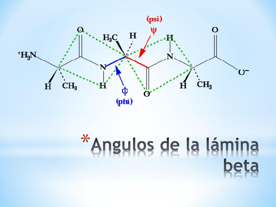 * En la lámina beta los puentes de hidrógeno pueden ocurrir entre diferentes cadenas polipeptídicas como una lámina intercatenaria y cada cadena en forma de zigzag está COMPLETAMENTE EXTENDIDA y los enlaces de hidrógeno ocasionan la formación de la estructura en forma de lámina.