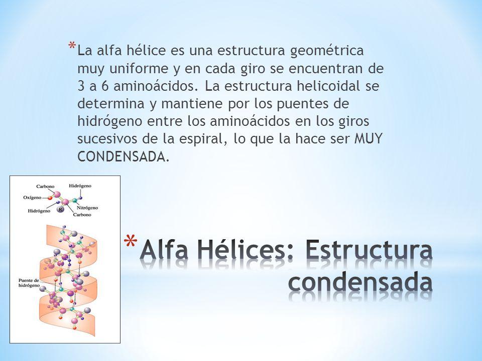 * La alfa hélice es una estructura geométrica muy uniforme y en cada giro se encuentran de 3 a 6 aminoácidos. La estructura helicoidal se determina y