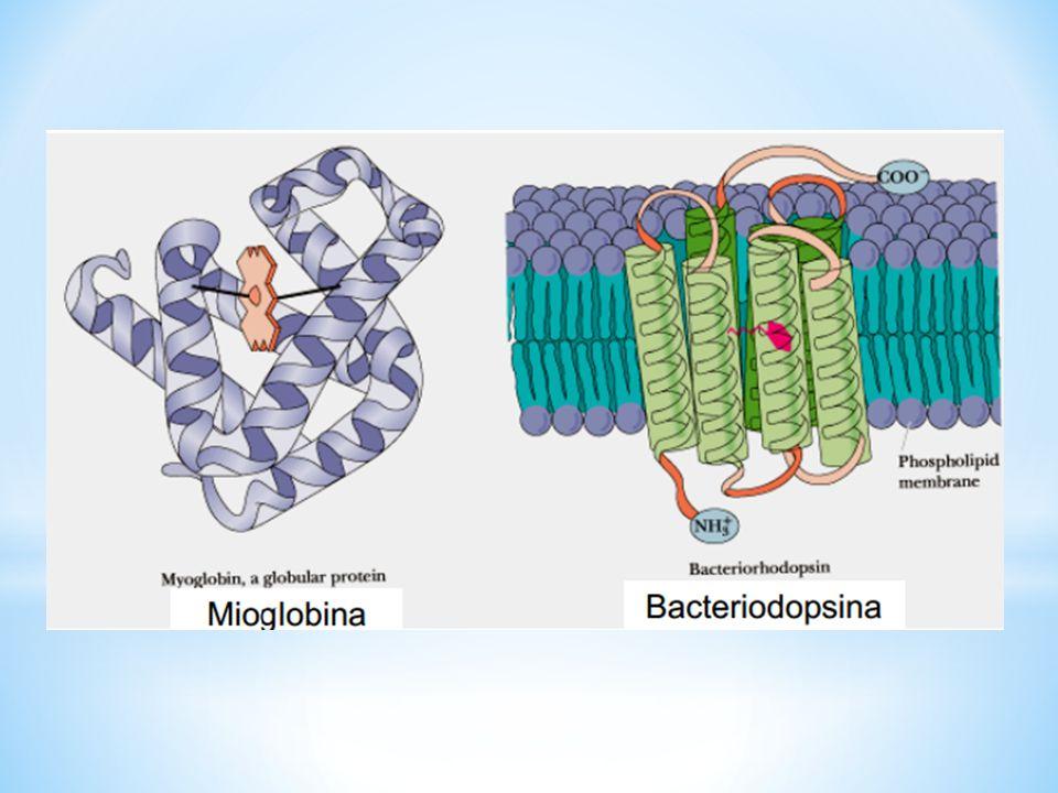 Bibliografía: Karp Gerald.Biología Celular y Molecular: Conceptos y experimentos.