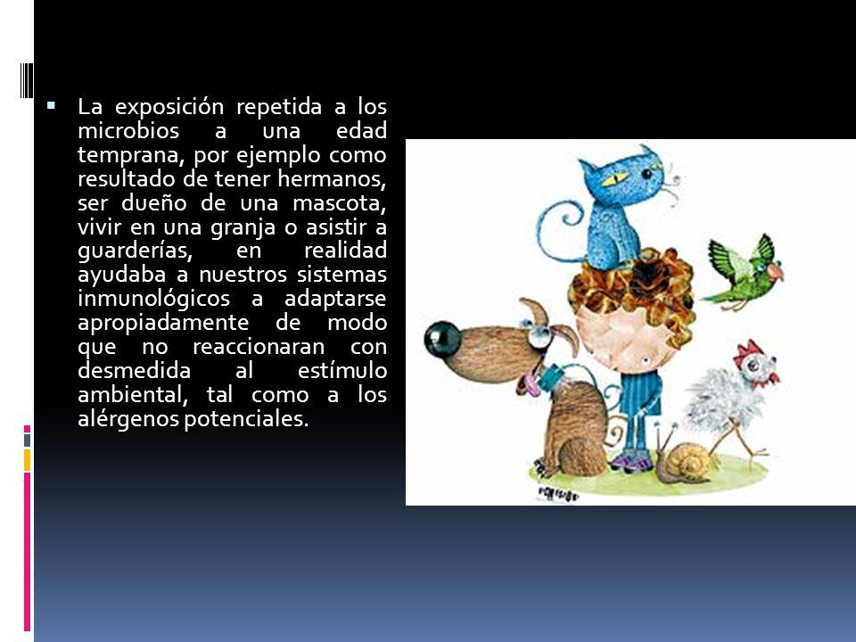 La exposición repetida a los microbios a una edad temprana, por ejemplo como resultado de tener hermanos, ser dueño de una mascota, vivir en una granj