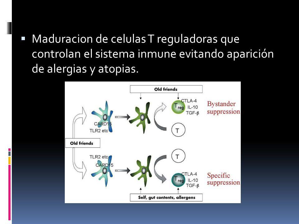 Maduracion de celulas T reguladoras que controlan el sistema inmune evitando aparición de alergias y atopias.