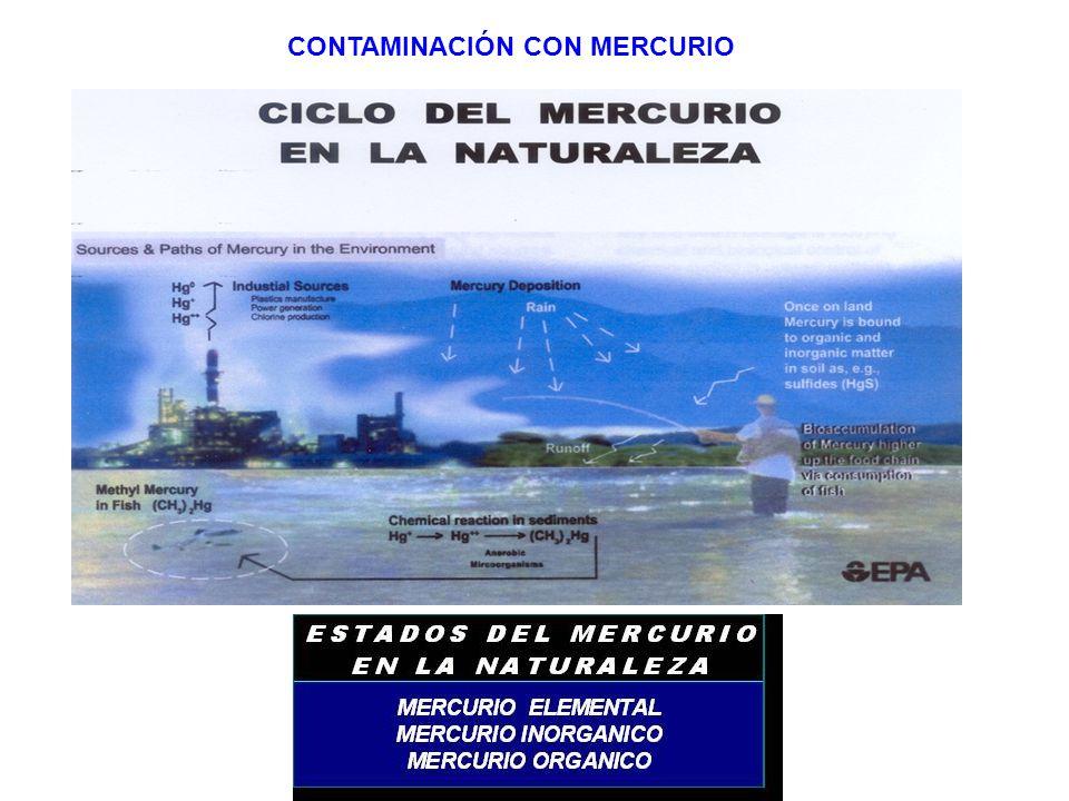 Cámara de ASOMINEROS PRINCIPALES CIFRAS DEL SECTOR MINERO VARIABLEUNIDADES2011 VARIACION 2010(%) Producciòn carbònMill de ton.85,8015,32 Producciòn oroToneladas55,904,29 PIB (valor agregado)Billones $10,335,30 Exportacion carbonMillones US$8.39739,60 Exportacion oroMillones US$1.59229,79 Inversion extranjeraMillones US$2.62149,34 Empleos directos# ocupados168.33811,40 RegalíasBillones$ 9,7031 OTROS: Calizas, Esmeraldas, Niquel