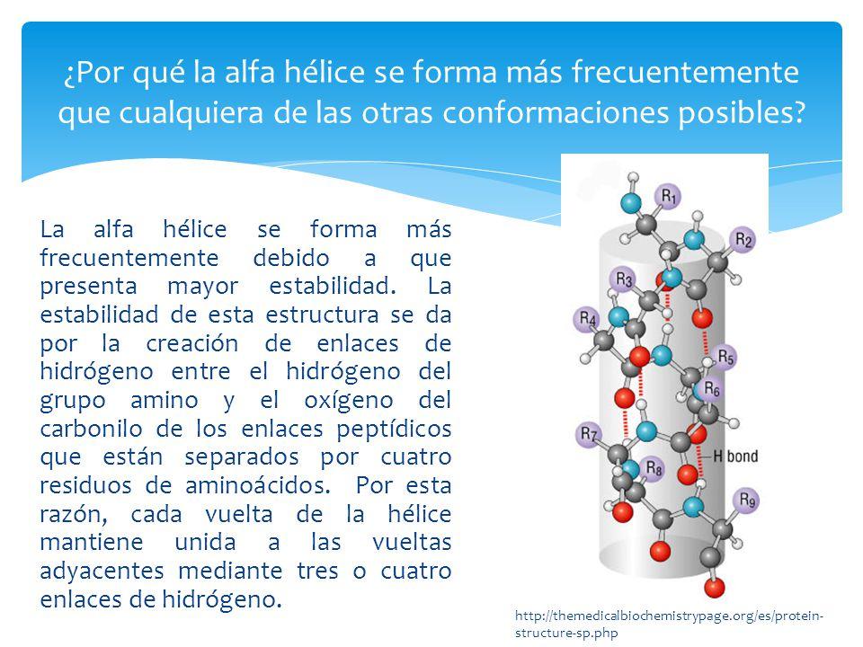 La estabilidad de la alfa hélice esta afectada por diversos factores que incluyen, entre los mas importantes: Las interacciones electrostáticas entre aminoácidos sucesivos con cadenas R que contienen grupos cargados.