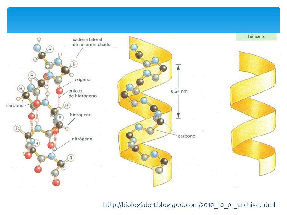 La a-queratina, el colágeno y la fibroína reflejan la relación entre la estructura proteica y la función que cumplen.