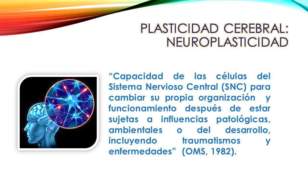 Capacidad de las células del Sistema Nervioso Central (SNC) para cambiar su propia organización y funcionamiento después de estar sujetas a influencia