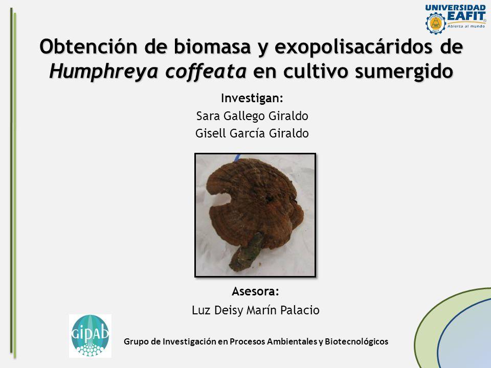 Obtención de biomasa y exopolisacáridos de Humphreya coffeata en cultivo sumergido Investigan: Sara Gallego Giraldo Gisell García Giraldo Asesora: Luz