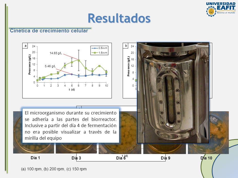 Resultados Cinética de crecimiento celular (a) 100 rpm, (b) 200 rpm, (c) 150 rpm 14.65 g/L 5.46 g/L 7.23g/L 14.71g/L 7.69 g/L Día 1 Día 3Día 6Día 9Día