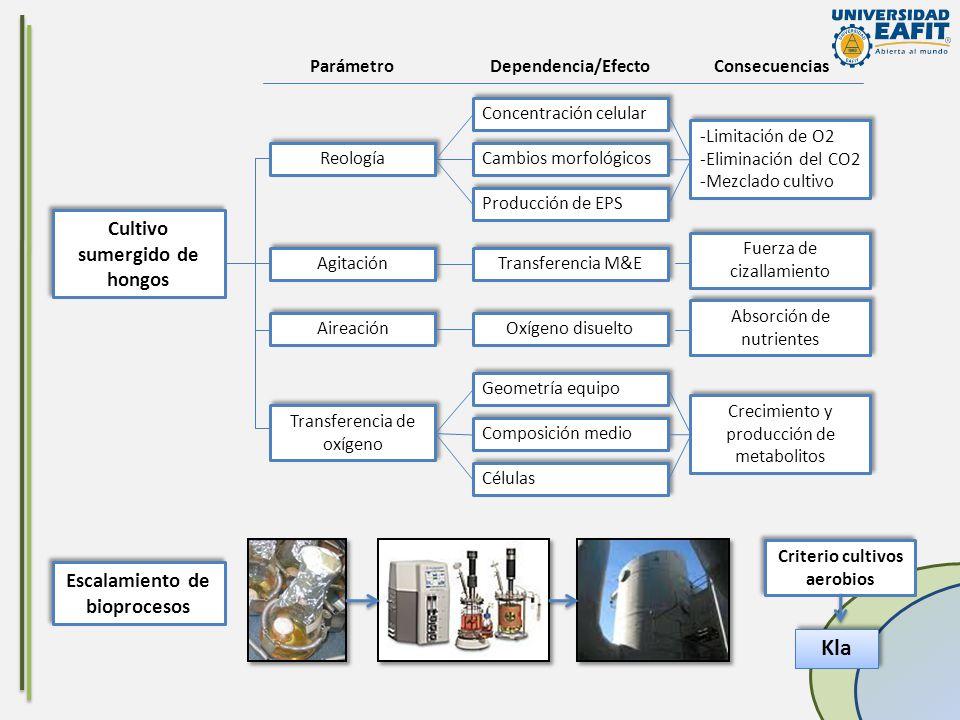 Cultivo sumergido de hongos Reología Concentración celular Cambios morfológicos Producción de EPS -Limitación de O2 -Eliminación del CO2 -Mezclado cul