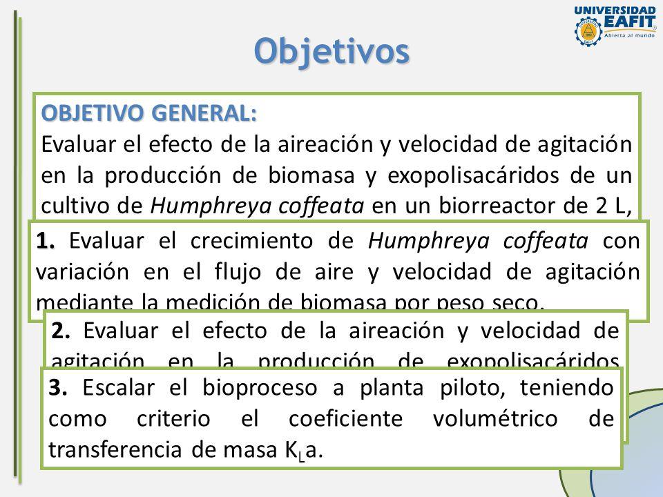 3. 3. Escalar el bioproceso a planta piloto, teniendo como criterio el coeficiente volumétrico de transferencia de masa K L a. OBJETIVO GENERAL: Evalu