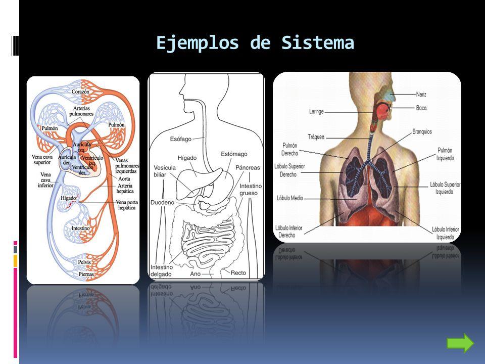 Ejemplos de Sistema