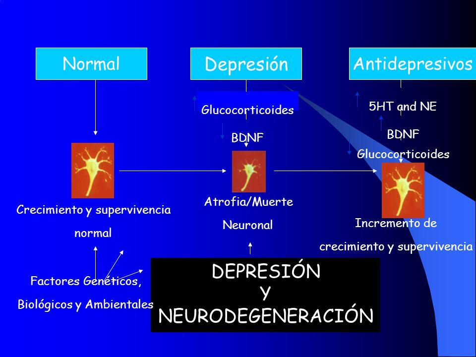Antidepresivos Depresión Normal DEPRESIÓN Y NEURODEGENERACIÓN Glucocorticoides BDNF Atrofia/Muerte Neuronal Crecimiento y supervivencia normal Increme
