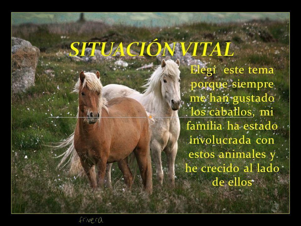 Elegí este tema porque siempre me han gustado los caballos, mi familia ha estado involucrada con estos animales y he crecido al lado de ellos