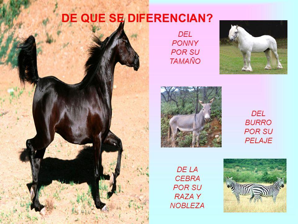 ¿Qué es? Los caballos son animales pertenecientes a los mamíferos y que también forman parte de la familia de los cuadrúpedos. Estos animales poseen u