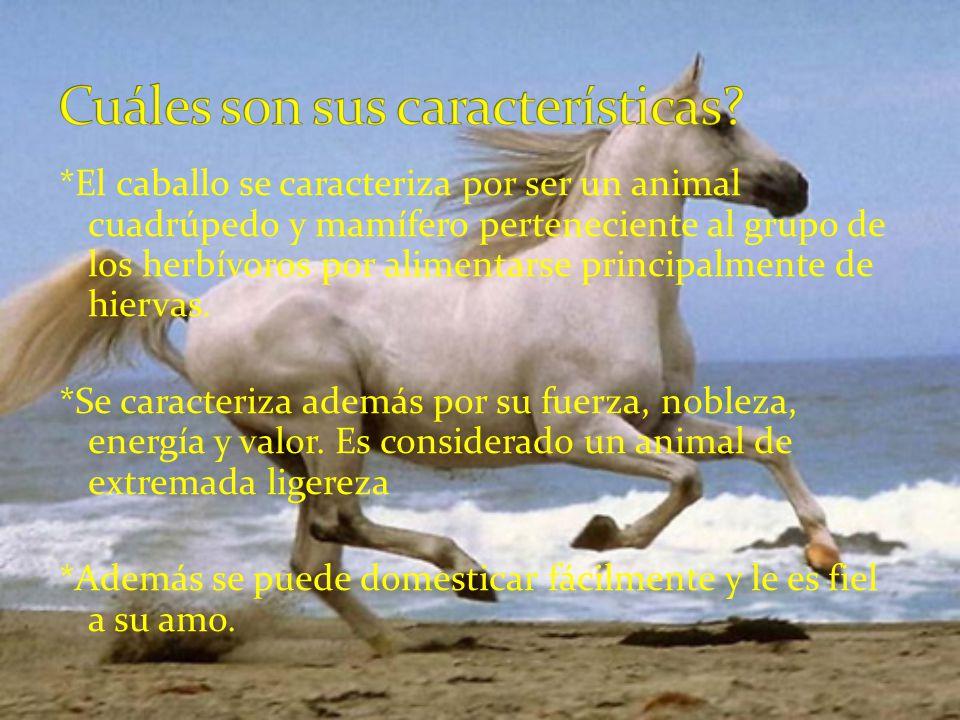 *El caballo se caracteriza por ser un animal cuadrúpedo y mamífero perteneciente al grupo de los herbívoros por alimentarse principalmente de hiervas.