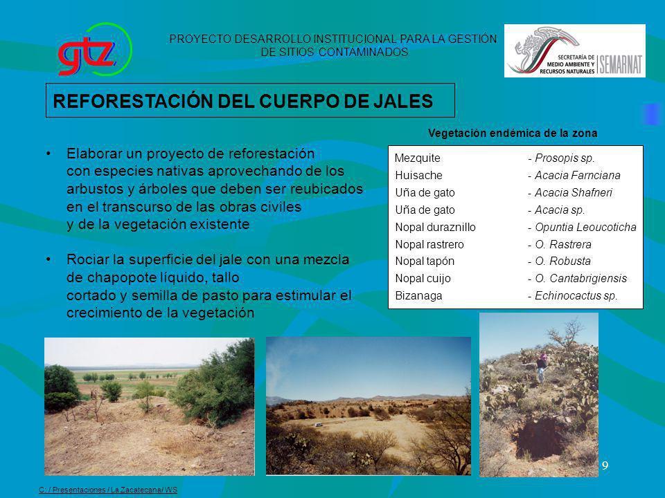 9 REFORESTACIÓN DEL CUERPO DE JALES Elaborar un proyecto de reforestación con especies nativas aprovechando de los arbustos y árboles que deben ser re