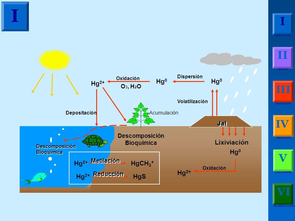 Descomposición Bioquímica Descomposición Bioquímica Descomposición Bioquímica Acumulación Dispersión Hg 0 Volatilización Jal Lixiviación Hg 0 O 3, H 2 O Oxidación Hg 2+ Depositación Hg 2+ Metilación HgCH 3 + Hg 2+ Reducción HgS Oxidación Hg 2+ I I INTRODUCCIÓN II OBJETIVO III METODOLOGÍA IV RESULTADOS V CONCLUSIONES RECOMENDACIONES VI