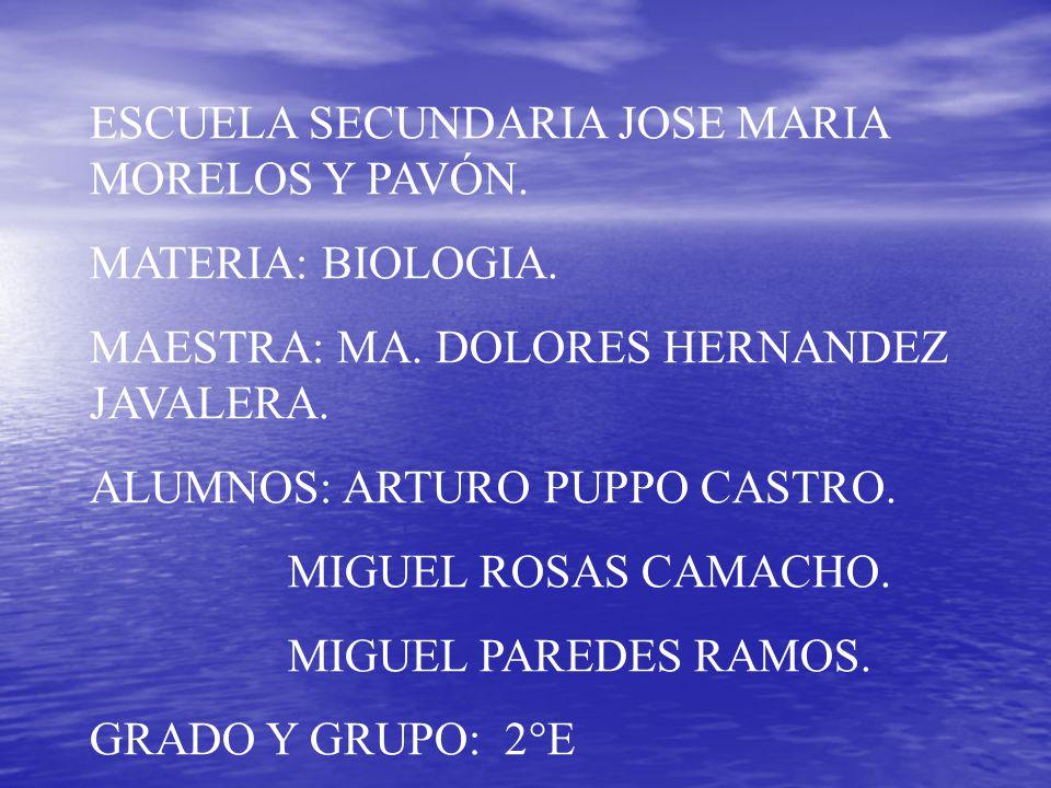 ESCUELA SECUNDARIA JOSE MARIA MORELOS Y PAVÓN.MATERIA: BIOLOGIA.