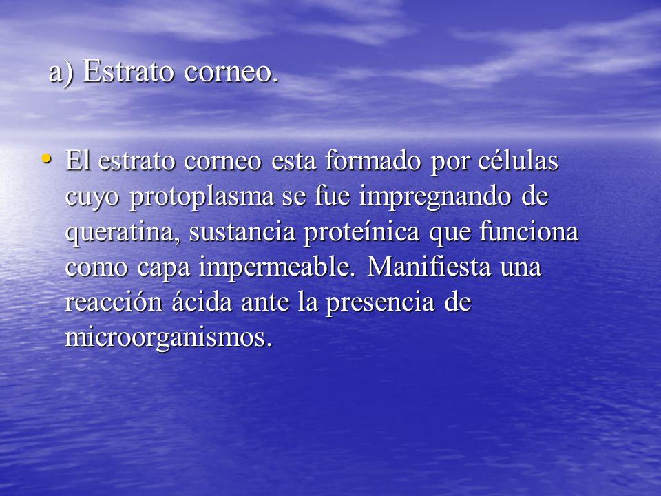 a) Estrato corneo.a) Estrato corneo.