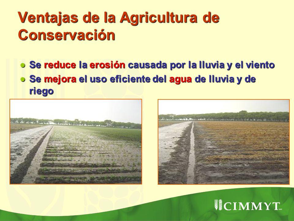 Ventajas de la Agricultura de Conservación Se reduce la erosión causada por la lluvia y el viento Se reduce la erosión causada por la lluvia y el vien