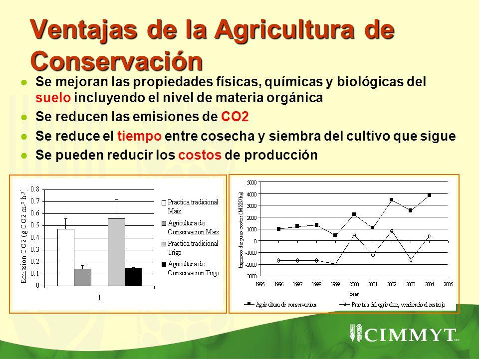Ventajas de la Agricultura de Conservación Se mejoran las propiedades físicas, químicas y biológicas del suelo incluyendo el nivel de materia orgánica