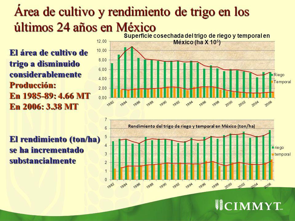 Rendimiento del trigo de riego y temporal en México (ton/ha) Área de cultivo y rendimiento de trigo en los últimos 24 años en México El área de cultiv