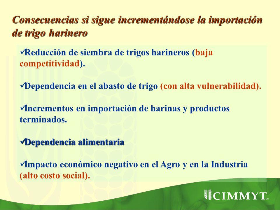 Reducción de siembra de trigos harineros (baja competitividad). Dependencia en el abasto de trigo (con alta vulnerabilidad). Incrementos en importació