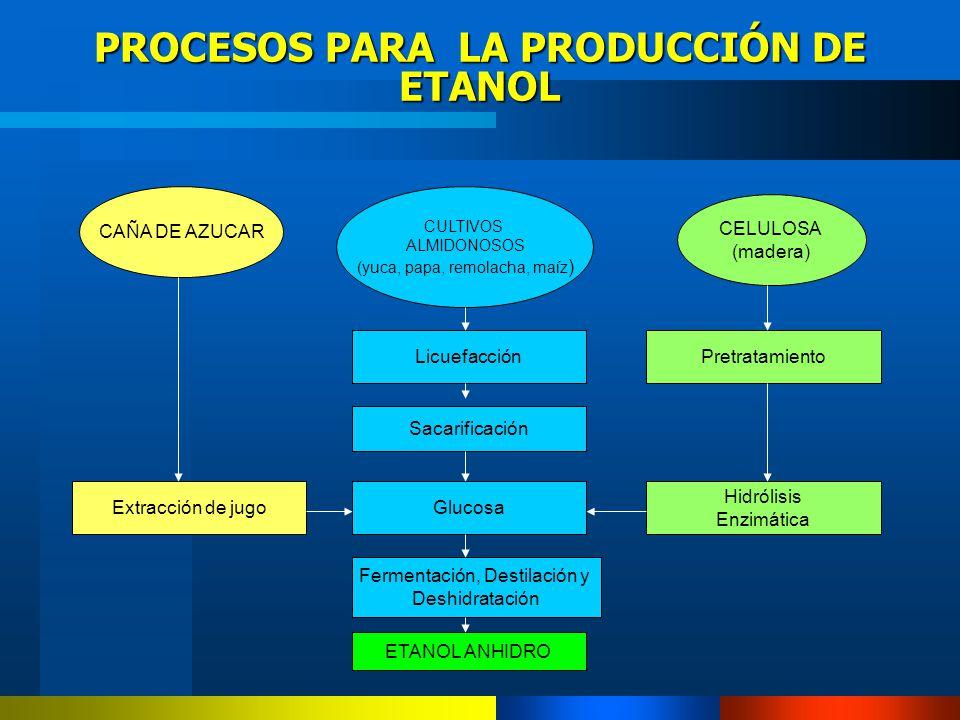 PROCESOS PARA LA PRODUCCIÓN DE ETANOL CAÑA DE AZUCAR CULTIVOS ALMIDONOSOS (yuca, papa, remolacha, maíz ) CELULOSA (madera) Licuefacción Sacarificación