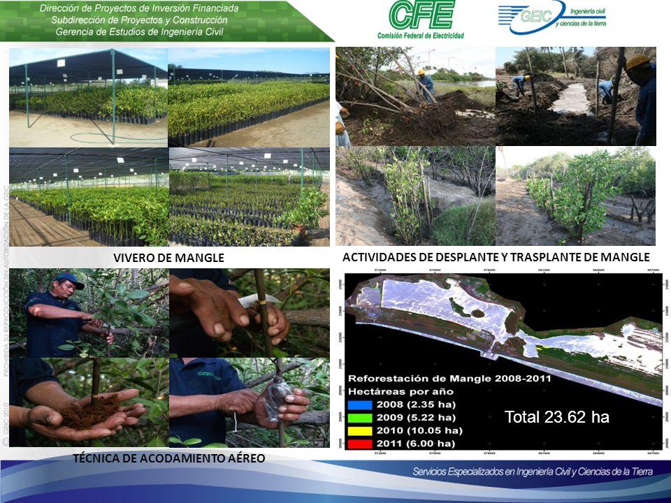TÉCNICA DE ACODAMIENTO AÉREO VIVERO DE MANGLE ACTIVIDADES DE DESPLANTE Y TRASPLANTE DE MANGLE Total 23.62 ha