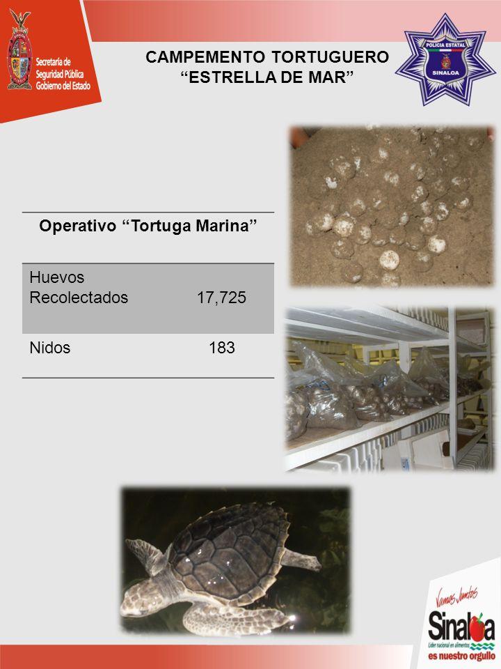 CAMPEMENTO TORTUGUERO ESTRELLA DE MAR Operativo Tortuga Marina Huevos Recolectados17,725 Nidos183