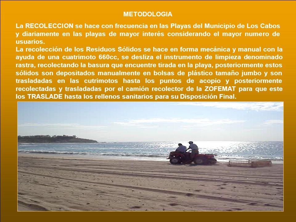 METODOLOGIA La RECOLECCION se hace con frecuencia en las Playas del Municipio de Los Cabos y diariamente en las playas de mayor interés considerando e