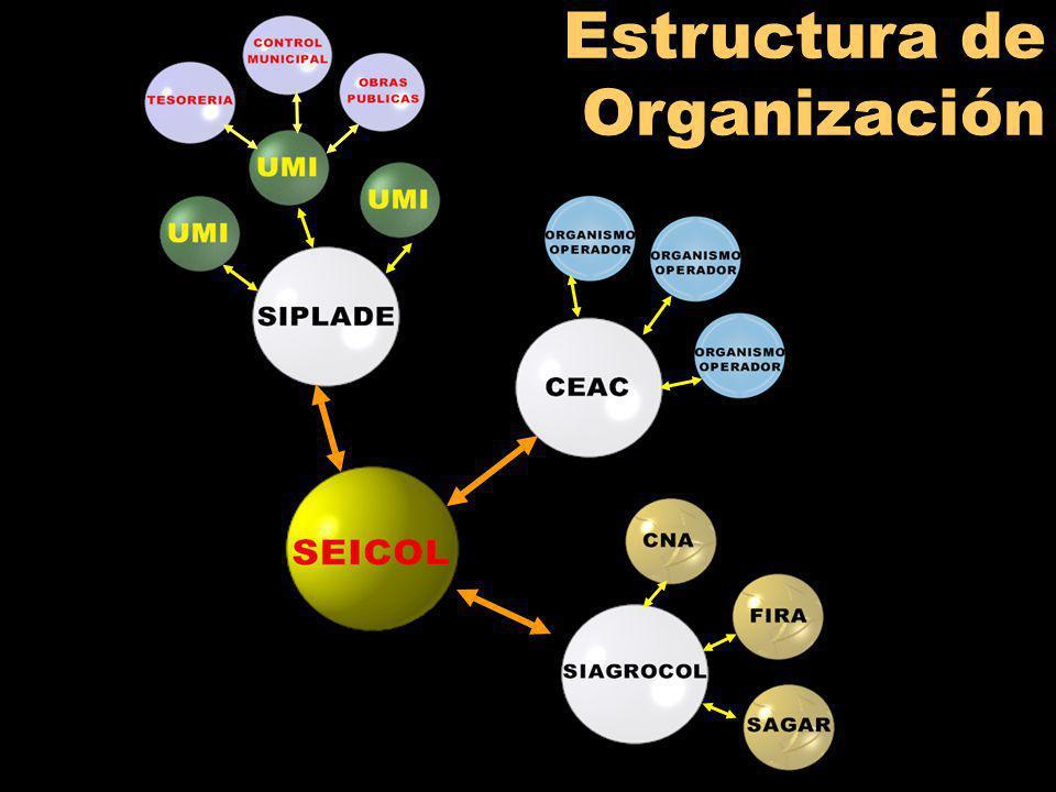 Estructura de Organización