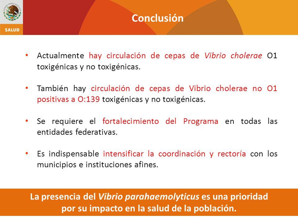 Actualmente hay circulación de cepas de Vibrio cholerae O1 toxigénicas y no toxigénicas.