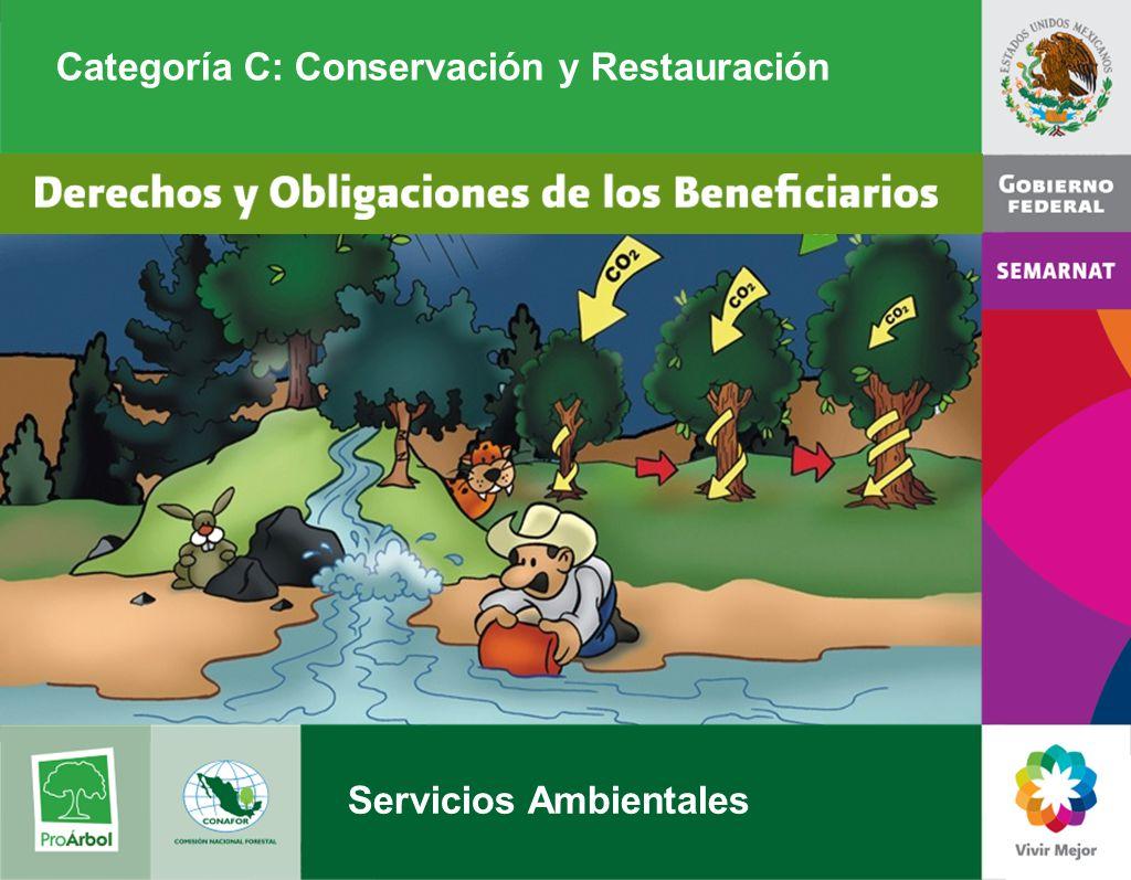Categoría C: Conservación y Restauración Servicios Ambientales