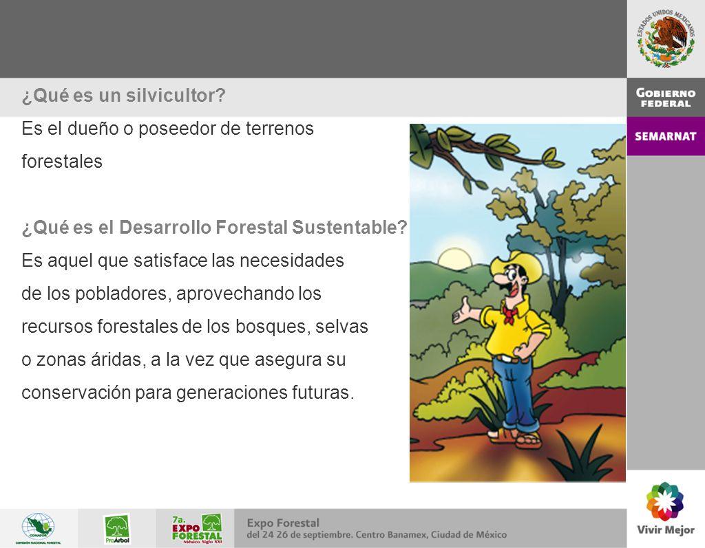 ¿Qué es un silvicultor? Es el dueño o poseedor de terrenos forestales ¿Qué es el Desarrollo Forestal Sustentable? Es aquel que satisface las necesidad