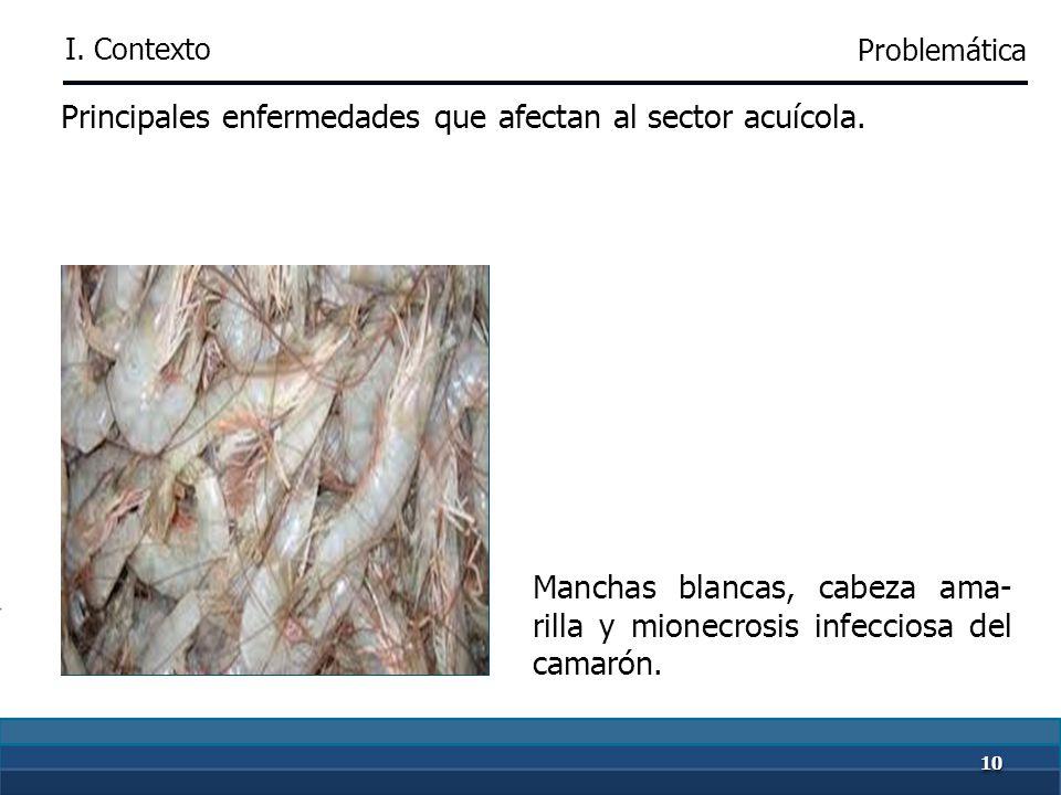 99 Principales enfermedades que afectan a la producción pecuaria. Bovino:brucelosis, tuberculosis, garrapata y rabia paralí- tica Porcino: fiebre porc