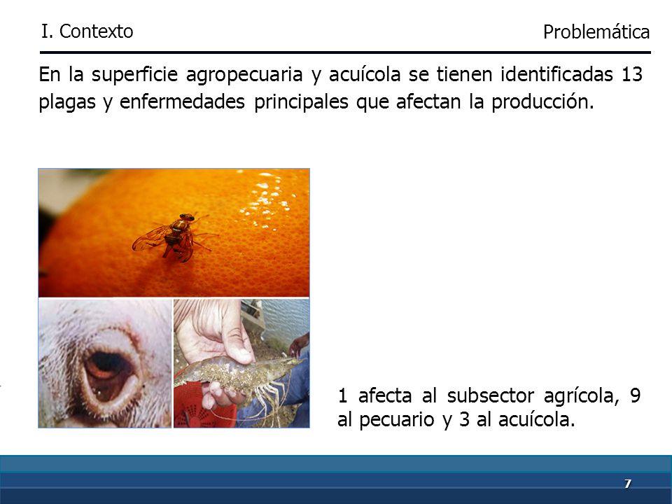 77 En la superficie agropecuaria y acuícola se tienen identificadas 13 plagas y enfermedades principales que afectan la producción.