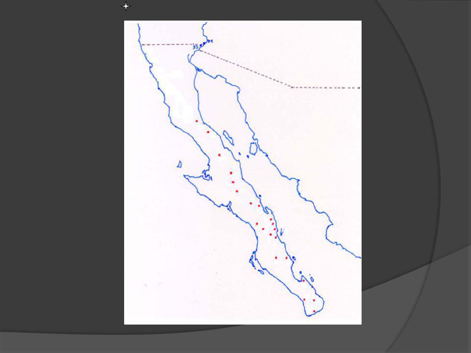 N S Misiones y visitas jesuitas Mapa de Localización de las Misiones y visitas Jesuitas en Baja California