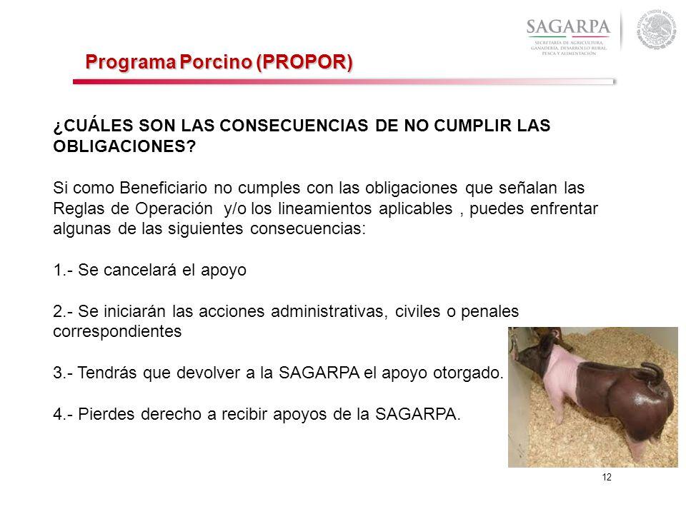 12 Programa Porcino (PROPOR) ¿CUÁLES SON LAS CONSECUENCIAS DE NO CUMPLIR LAS OBLIGACIONES? Si como Beneficiario no cumples con las obligaciones que se