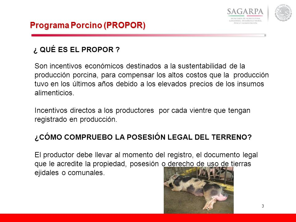 3 Programa Porcino (PROPOR) ¿ QUÉ ES EL PROPOR ? Son incentivos económicos destinados a la sustentabilidad de la producción porcina, para compensar lo