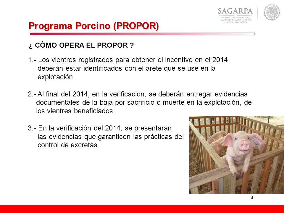 4 Programa Porcino (PROPOR) ¿ CÓMO OPERA EL PROPOR ? 1.- Los vientres registrados para obtener el incentivo en el 2014 deberán estar identificados con