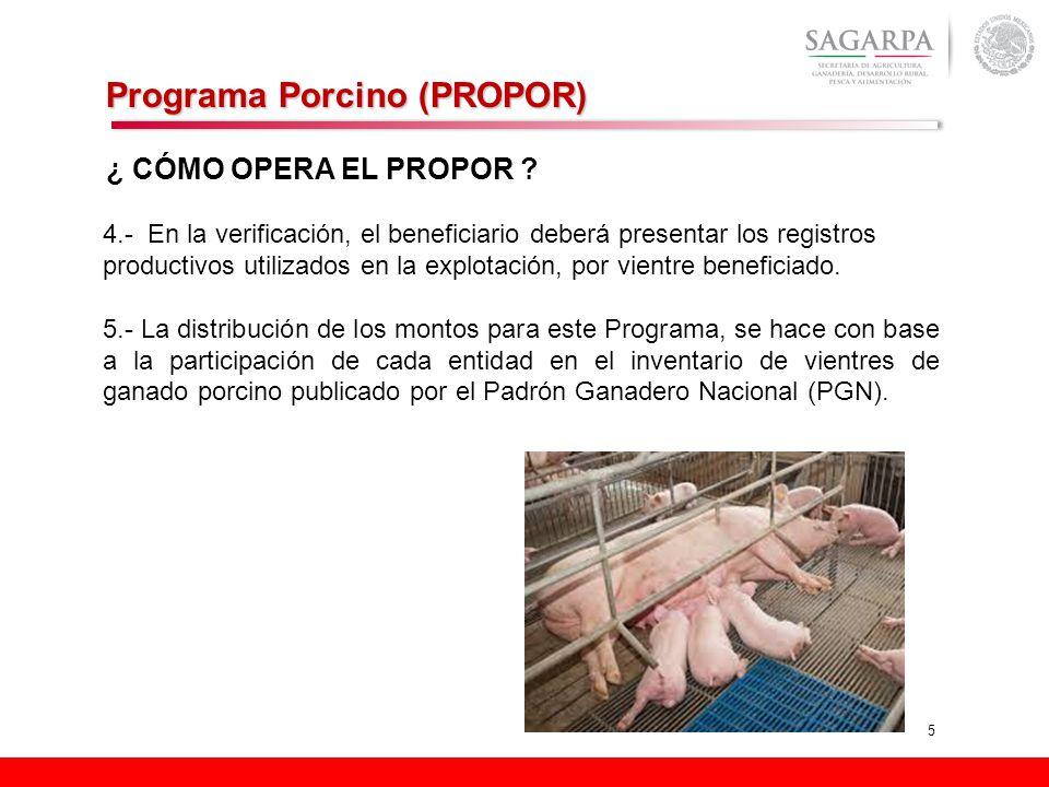 5 Programa Porcino (PROPOR) ¿ CÓMO OPERA EL PROPOR ? 4.- En la verificación, el beneficiario deberá presentar los registros productivos utilizados en
