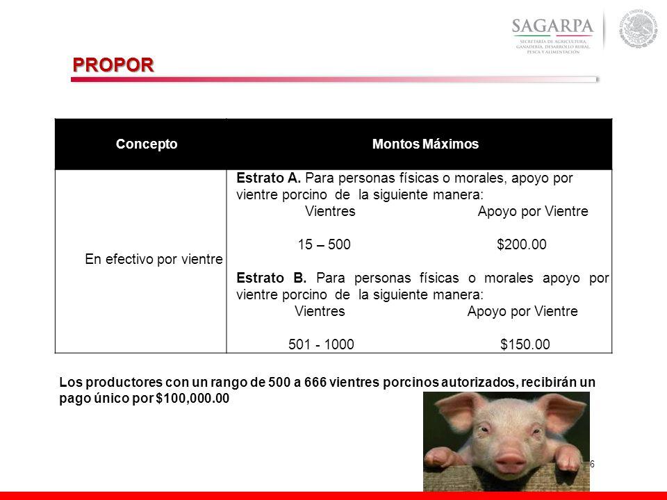 6 ConceptoMontos Máximos En efectivo por vientre Estrato A. Para personas físicas o morales, apoyo por vientre porcino de la siguiente manera: Vientre