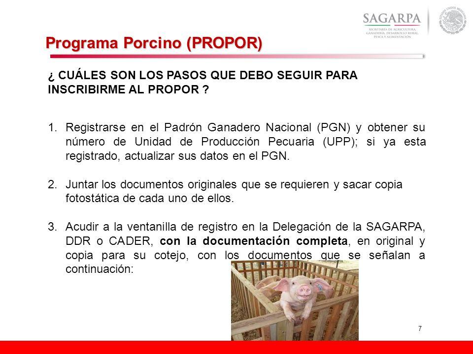 7 Programa Porcino (PROPOR) ¿ CUÁLES SON LOS PASOS QUE DEBO SEGUIR PARA INSCRIBIRME AL PROPOR ? 1.Registrarse en el Padrón Ganadero Nacional (PGN) y o